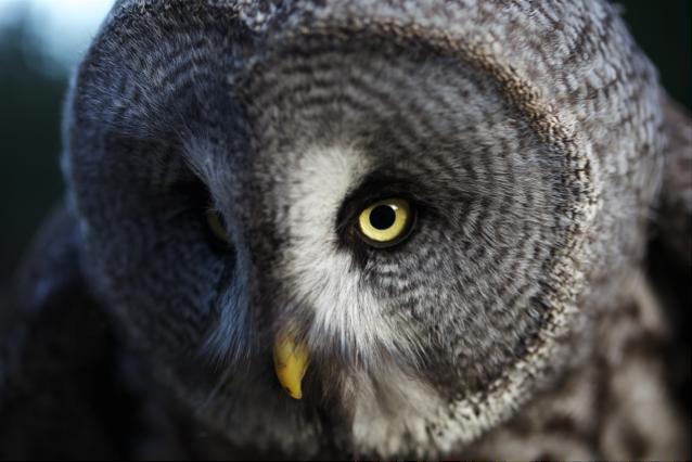 Owl_01_canonEOSFlash