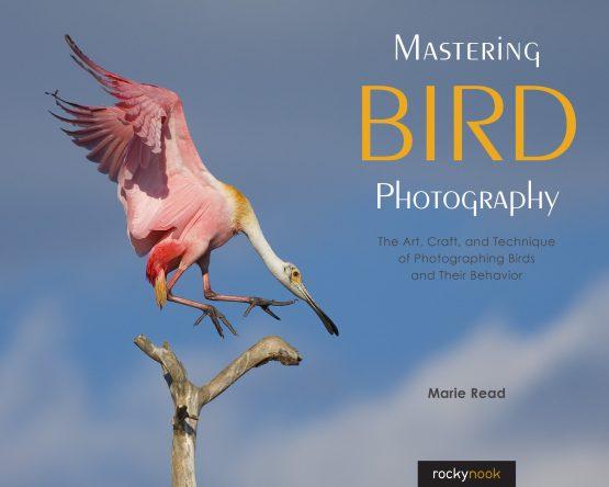 Read_MasteringBIRD_C1