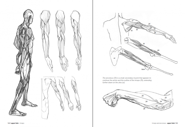 anatomy for the artist pdf free download